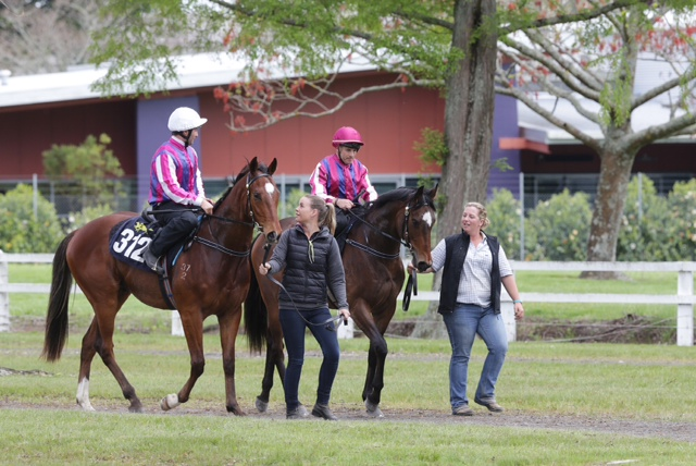 karaka breeze up